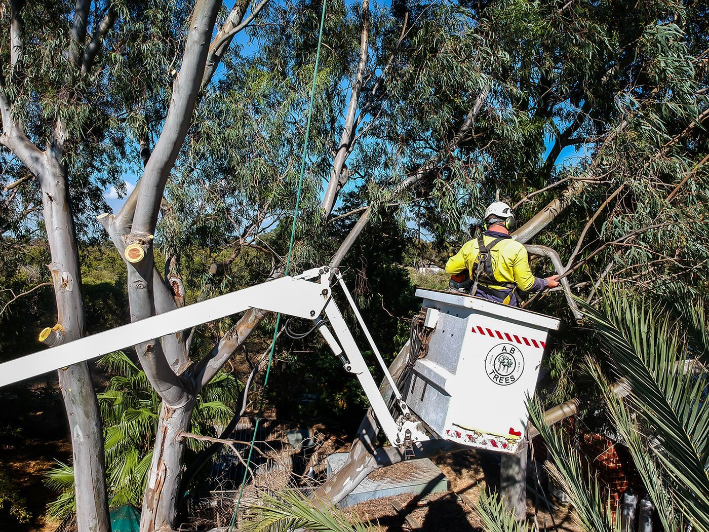 tree pruning in Perth by ABTrees