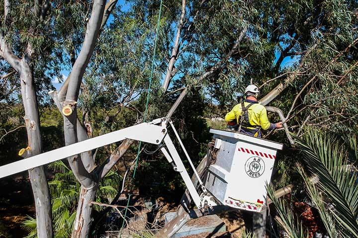 Tree Removal With Crane Service