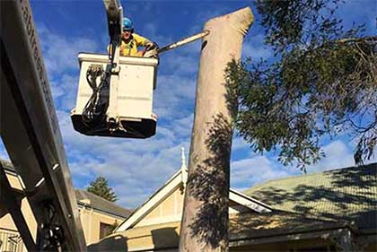 Tree Lopping in a Crane