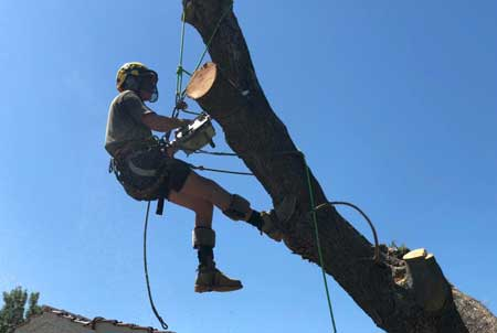 Tree Lopping Perth Tree Removal Services Tree Felling