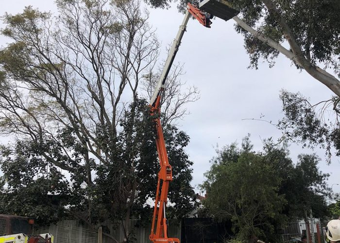large tree removal service in Perth