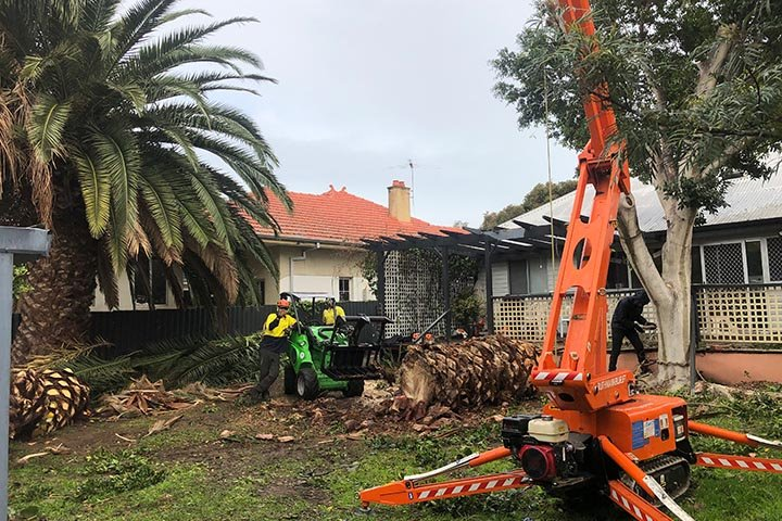 palm tree removal 02