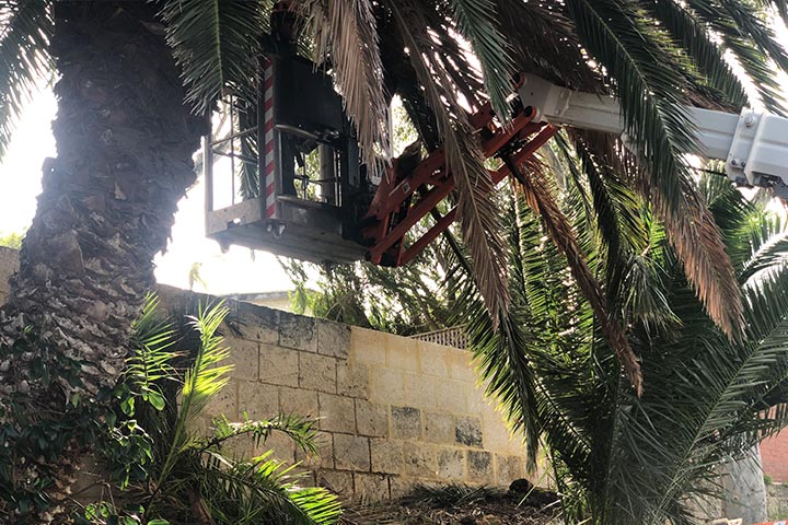 palm tree removal 03