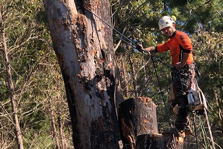 tree surgeon in a tree