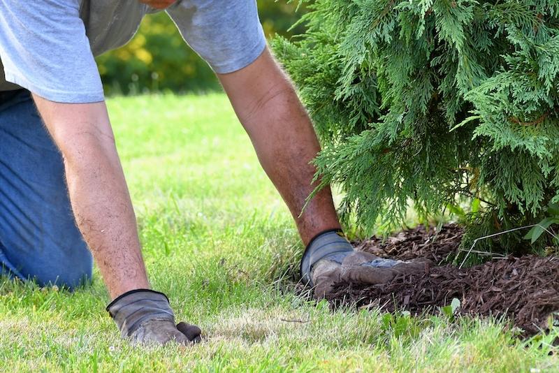 man doing yard work chores by spreading mulch